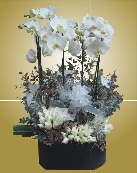 Orkide ve Beyaz Gül